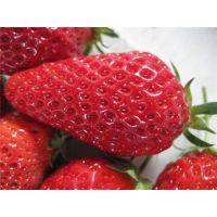 仁源农业科技(在线咨询),台州市甜宝草莓苗,甜宝草莓苗价格