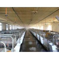 牧业养殖场自动喷雾消毒系统安装效果分析