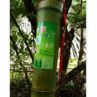 天然竹筒酒,千亩竹林培育,诚招代理;18859826009