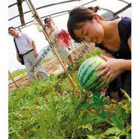 上海农家乐自助游 自助烧烤吃土菜 钓大鱼采新鲜水果