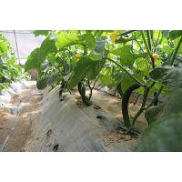 太原周边采摘 草莓水果蔬菜采摘 六一节来天怡山采杏子咯