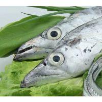 青岛进口马来西亚带鱼清关代理,青岛进口冷冻带鱼清关代理
