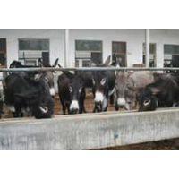 山东肉驴养殖场雨润大型肉驴养殖基地
