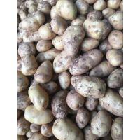 荷兰土豆 土地价格 土豆批发 山东土豆