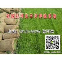 栾城县可依草坪种植基地