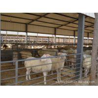 波尔山羊养殖场 波尔山羊价格 波尔山羊种羊肉羊养殖技术