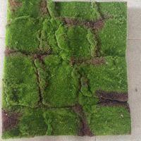 仿真青苔草皮微景观墙面绿草装饰苔藓草坪多肉植物盆景相框插花泥