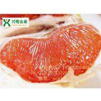 重庆柚子苗价格,柚子苗种植技术,柚子苗管理方法