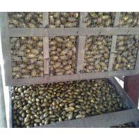 高温热泵槟榔烘干机,广州槟榔烘干机,福瑞斯永淦