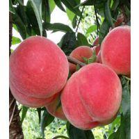 四川胭脂脆桃树苗基地,四川胭脂脆桃树苗,胭脂脆桃苗种植技术