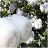 批发订做纯手工被芯棉花被蚕丝被供应棉絮特价销售 单位学生订做