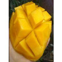 四川攀枝花现摘凯特芒 新鲜水果 优质大芒果