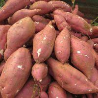 山东哪里供应红薯 山东红薯价格供应商