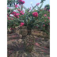 成都温江紫薇花瓶种植基地 1-3米高造型花瓶 崇德园林紫薇造型种植基地