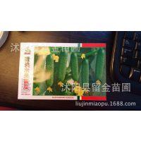 蔬菜种子批发 袋装小黄瓜种子 家庭 阳台种植经济装