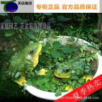 仿真 动物 青蛙 树脂动物仿真工艺品 花卉园艺盆栽饰品园艺迷你小