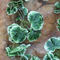 仿真藤(白边海棠叶)  绿色植物藤 海棠叶藤蔓 藤条批发