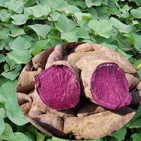优势的植物提取物产品,紫薯粉末1公斤起订,量大优惠