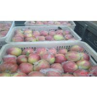 膜袋红富士苹果价格,2017膜袋红富士苹果价格,陕西膜袋红富士苹果价格。