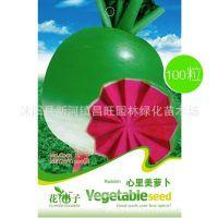 心里美萝卜种子 大萝卜 菜籽 家庭阳台种盆栽蔬菜种子 一袋100粒