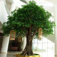 北京批发仿真植物盆景 树木盆景 假树 人造树价格