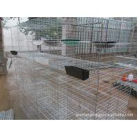 肉鸽笼,蛋鸽养殖笼,配对鸽笼子,安平飞创笼具批发,销量大,利润低。