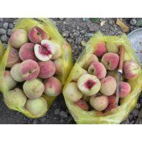 映霜红桃树苗 造林用果树苗木 春节上市桃树苗新品种