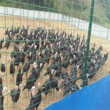 养殖护栏网 防护围墙网 围果园护栏
