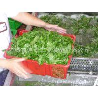 供应商用蔬菜清洗机,大型食堂洗菜机, 连续式蔬菜清洗机