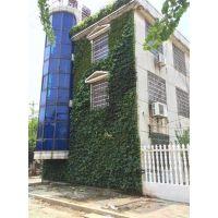 植物墙喷灌系统,黄冈植物墙,武汉植物墙价格