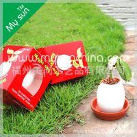 迷你植物 魔蛋 创意DIY盆栽 创意礼品 儿童玩具 趣味种植 小花农