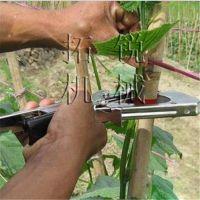 定西 拓锐蔓藤绑枝机 葡萄黄瓜藤绑扎机 批发手持绑蔓器 植物固定器