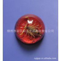 厂家直销 半圆球 彩色系列昆虫琥珀半圆球 特色精美摆件 人造琥珀