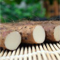 贵州特产高山种植山药新鲜蔬菜类绿色食品天然无硫 特色农产品