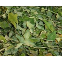 供应辣木籽提取物10:1 降血糖、降血脂 纯植物提取