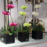 仿真非洲菊花瓶组合花艺 盆景塑料小花 非洲菊 清新小花