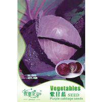 我要发芽 蔬菜种子 紫甘蓝种子 甘蓝 包菜 早熟 抗病耐寒 40粒/包