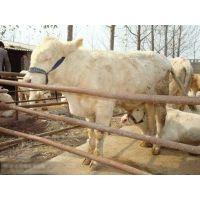 肉羊催肥饲料添加剂