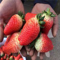 哪里有穴盘草莓苗 穴盘草莓苗价格 草莓二代苗多少钱