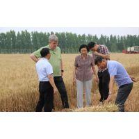 小麦秸秆发酵剂技术