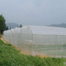 供应20目乙烯网防虫网 蚂蚱养殖大棚专用网 蝗虫养殖专用网