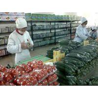 蔬菜配送-专业的蔬菜配送公司服务