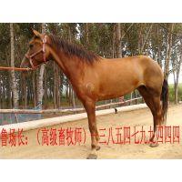 养马技术,迷你马,矮马养殖场,袖珍马,骑乘马,养马基地,宠物马价格