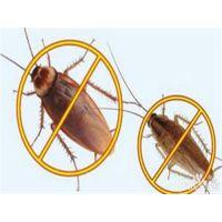 家庭杀虫公司、天下无虫、海淀家庭杀虫公司