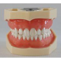 HST-A14标准牙模型28颗软牙龈