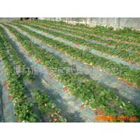 优质地膜莆田地膜/聚乙烯农用膜塑料薄膜透明地膜