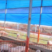 江西天蓝色透光帆布加工养殖卷帘-猪舍遮阳防雨搭棚蓬布批发