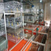 河北哪有卖高质量的肉鸡笼的厂家?价格是多少?