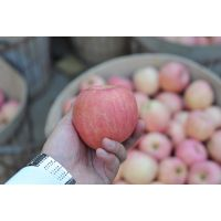 艾果乐优质烟台苹果栖霞苹果常年稳定高品质标准化供应商