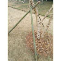 支撑、固定树苗的毛竹段